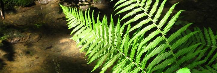 NÖ Kleinregionentag 2011 – Natur und Umwelt